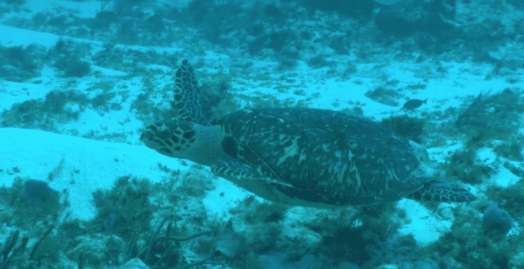 Playa Paraiso Turtle Sanctuary